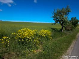Bei Trampe in der nordöstlichen Uckermark